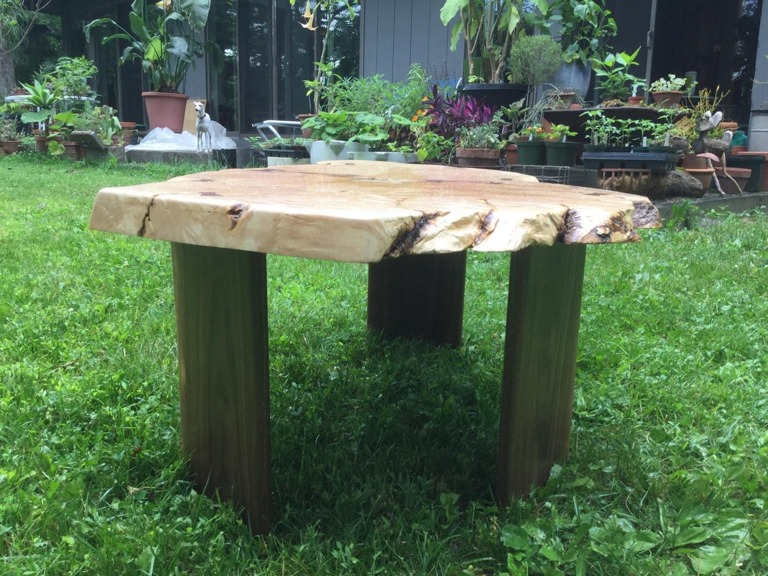 Japanese Maple Coffee Table
